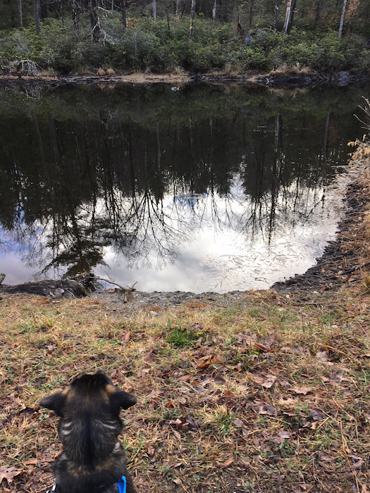 Asha looking at the beaver pond
