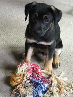 Asha turns threads into a chew toy