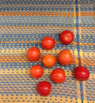 tomatoes drying on a handwoven towel